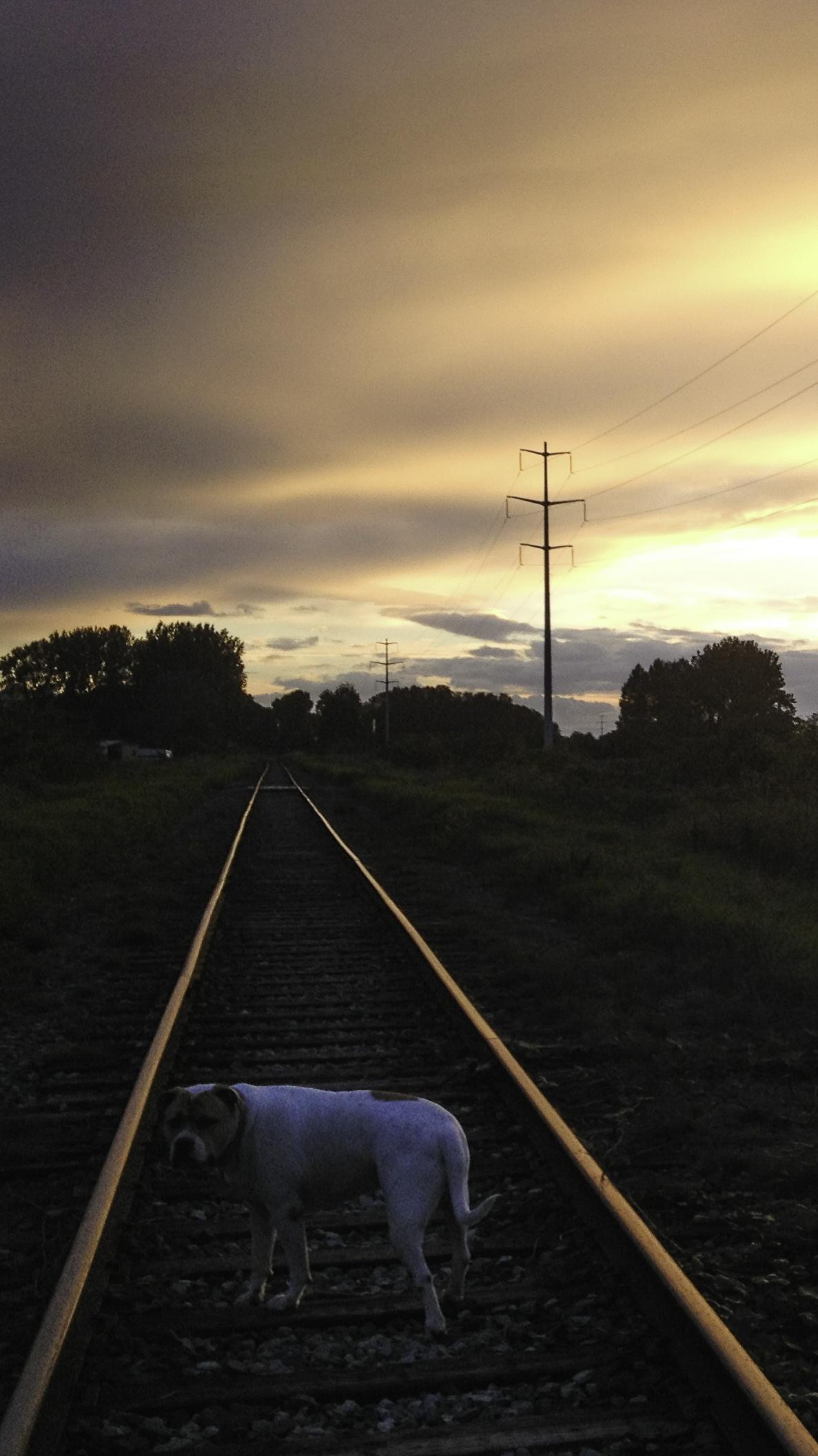 tracks-1